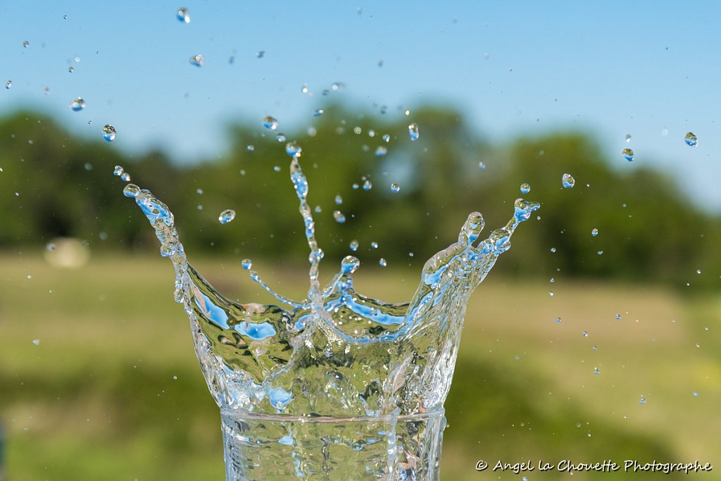 ALC-splash-0734-2.jpg